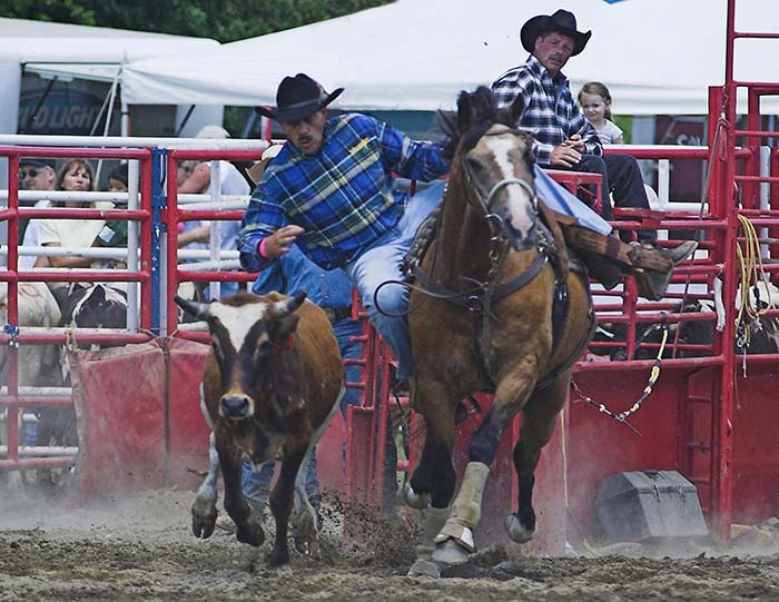 About to dismount onto a steer at the Ellicottville Rodeo! Photo by Daniel Clune