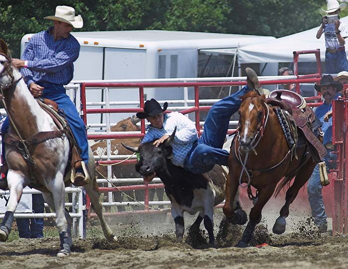 Starting to wrestle a Steer at the Ellicottville Rodeo! Photo by Daniel Clune